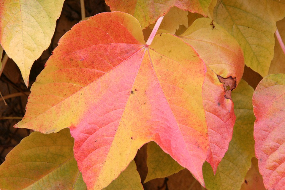 Autumn, Fall Foliage, Red, Yellow, Leaves