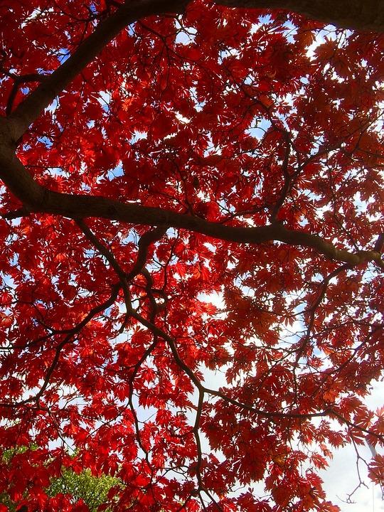 Leaves, Autumn, Tree