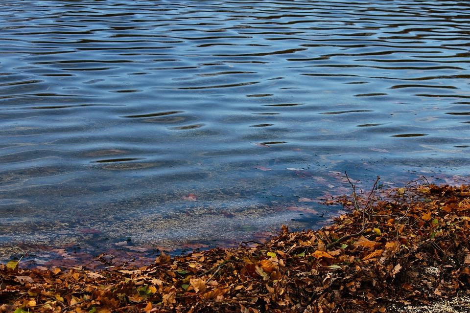 Lakeside, Lake, Bank, Water, Autumn, Leaves, Beach