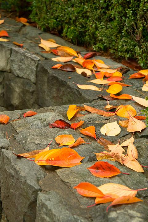 Autumn, Autumn Leaves, Yellow, Memory