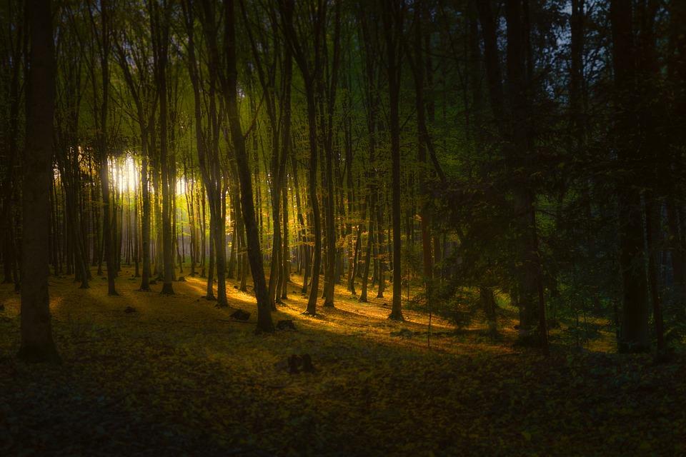 Forest, Light, Landscape, Trees, Autumn, Sunlight