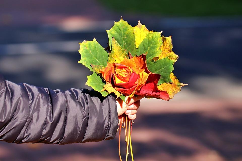 Bouquet, Autumn, Maple Leaves, Flora, Dried Leaves