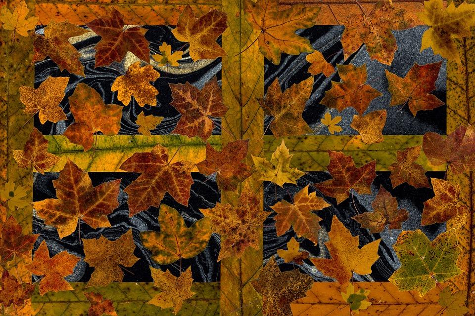Leaves, True Leaves, Maple, Autumn Leaf, Autumn