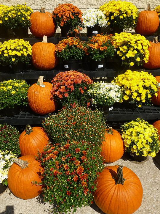 Autumn, Pumpkins, Flowers, Market