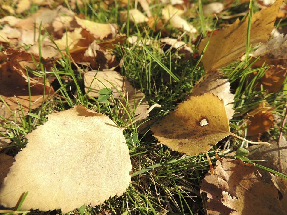 Leaves, Autumn, Ocher, Meadow, Yellowish, Macro