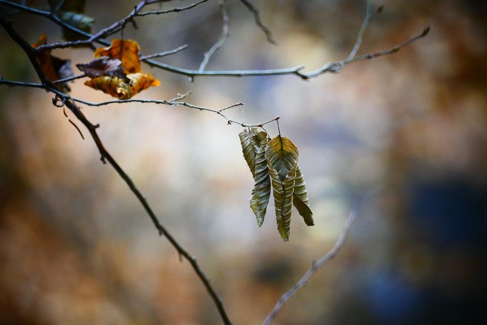 Fall Foliage, Leaf, Autumn Colours, Bokeh, Autumn Mood