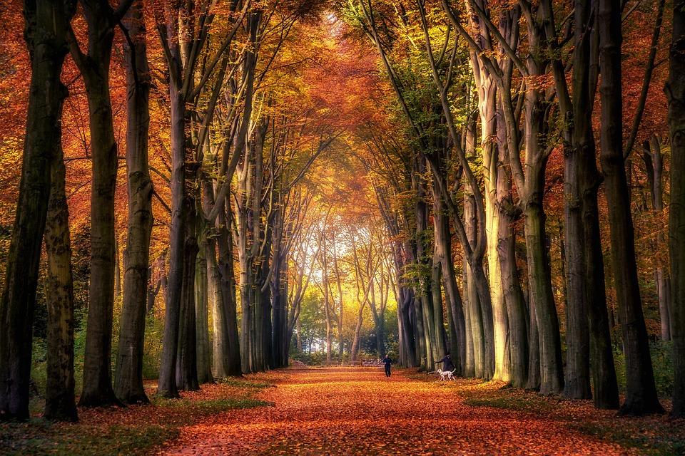 Autumn, Forest, Avenue, Leaves, Colourful, Autumn Mood