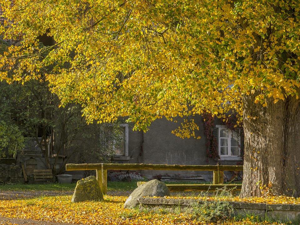 Autumn, Autumn Mood, Leaves, Fall Color, Colorful