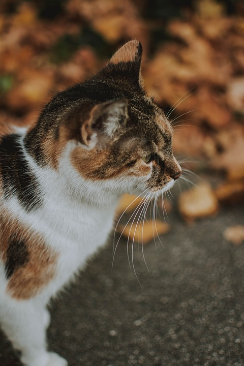 Cat, Autumn, Autumn Mood, Autumn Colours, Nature