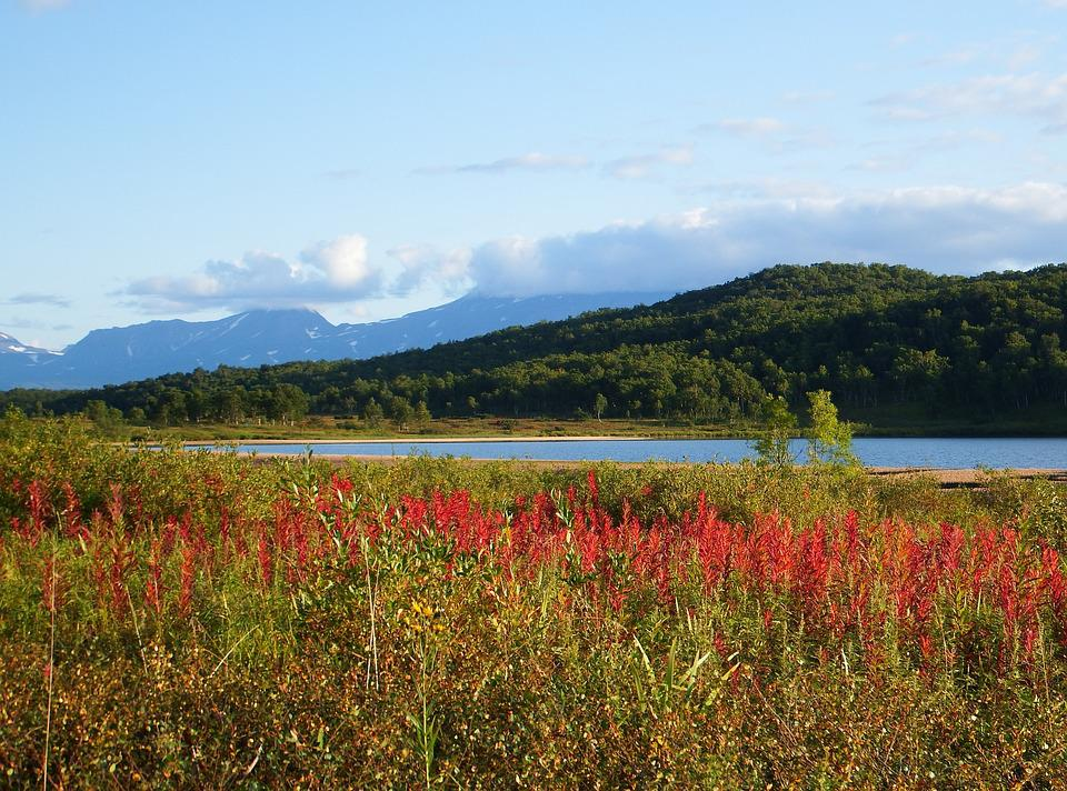 Lake, Mountains, Forest, Autumn, Sky, Clouds, Weed