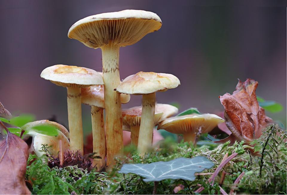 Mushroom, Mushrooms, Macro, Autumn, Forest, Leaves