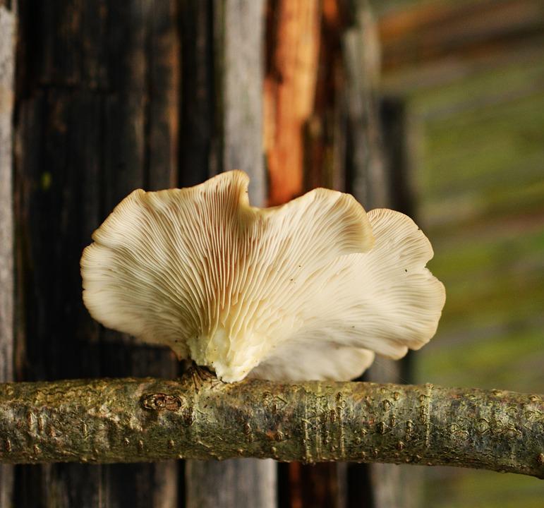 Tree Fungus, Mushroom, Mushrooms On Tree, Autumn, Tribe