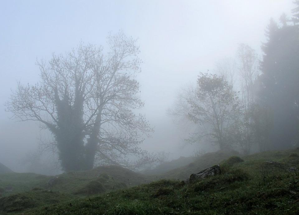 Trees, Mystical, Fog, Autumn, Foggy, Gespenstig