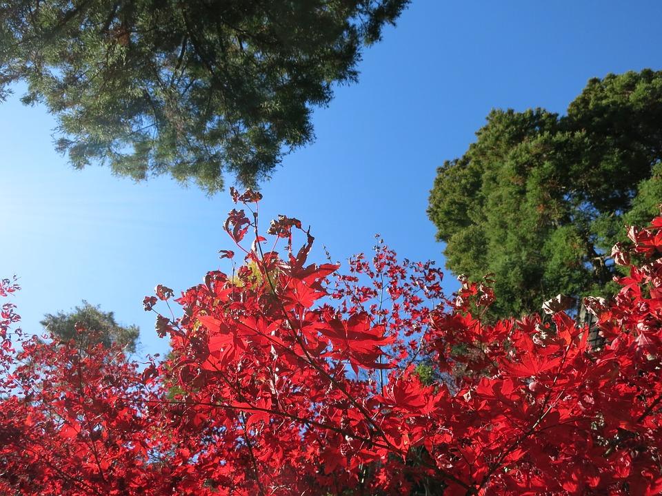 Autumnal Leaves, Natural, Autumn