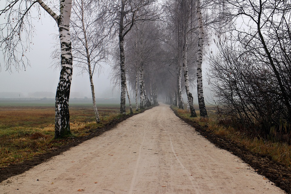 Birch, Avenue, Away, Autumn, Frost, Cold, Fog, Nature