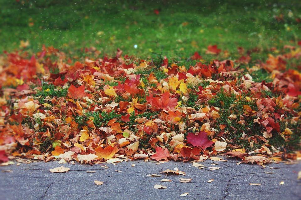 Sheet, Nature, Autumn, Color, No One, Park, Background