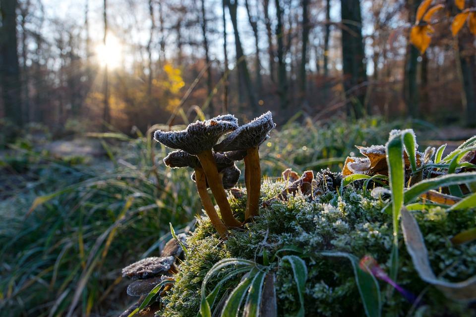 Mushrooms, Forest, Autumn, Nature, Close Up