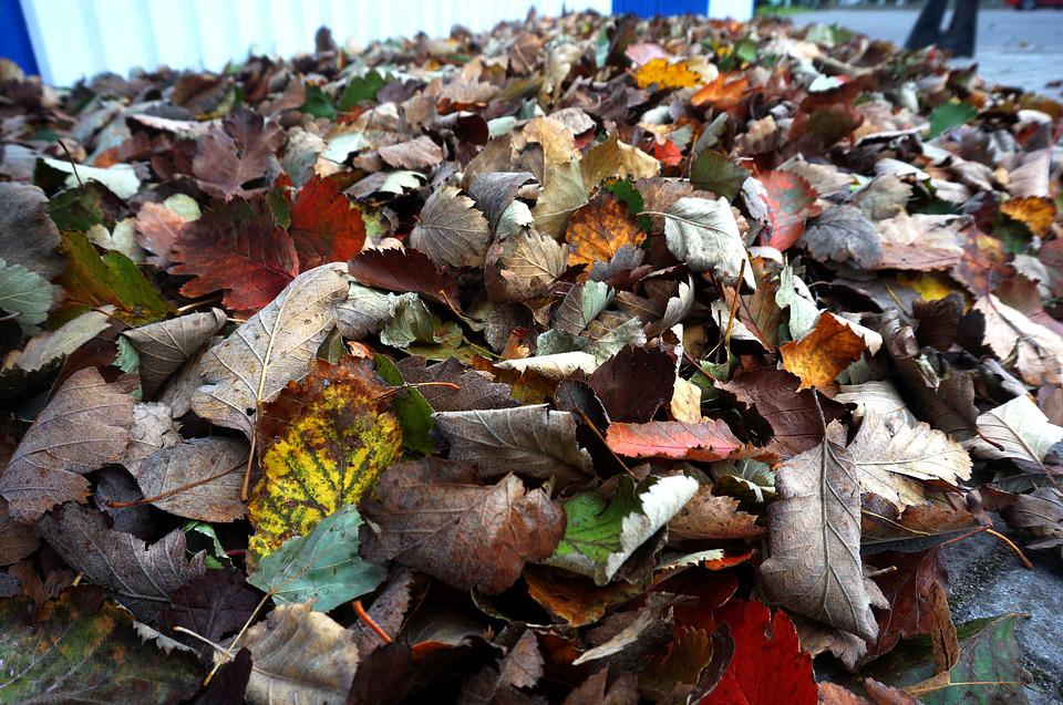 Leaves, Collection, Bag, Autumn, Nature, A Bunch Of