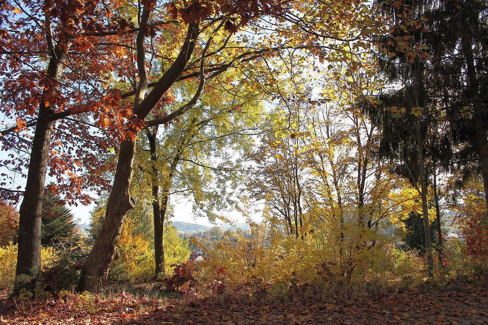 Autumn, Forest, Colorful, Trees, Shrubs, Nature