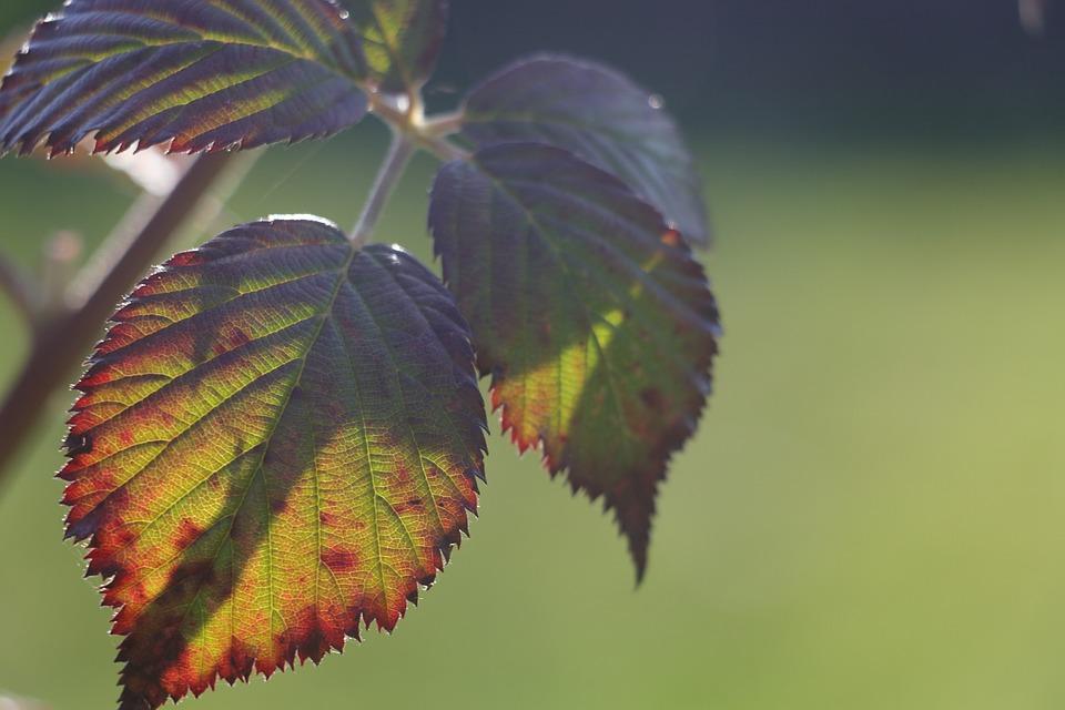 Nature, Leaf, Green, Plant, Autumn, Environment