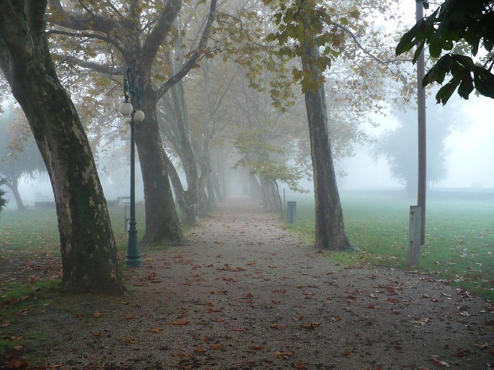 Autumn, Promo, Wood, Trees, Nature, Fog