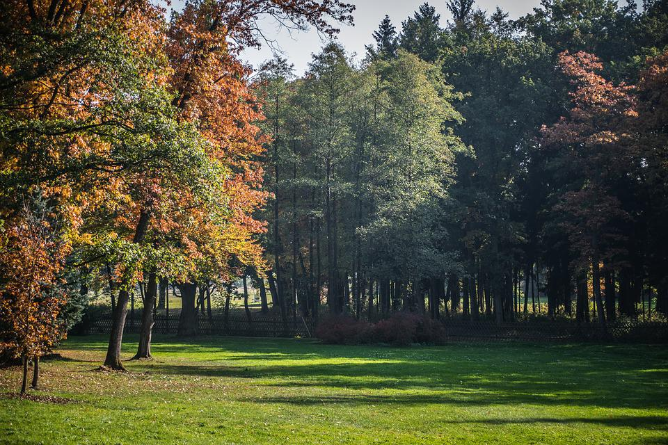 Autumn, Park, Forest, Leaves, Nature, Outdoor, Trees