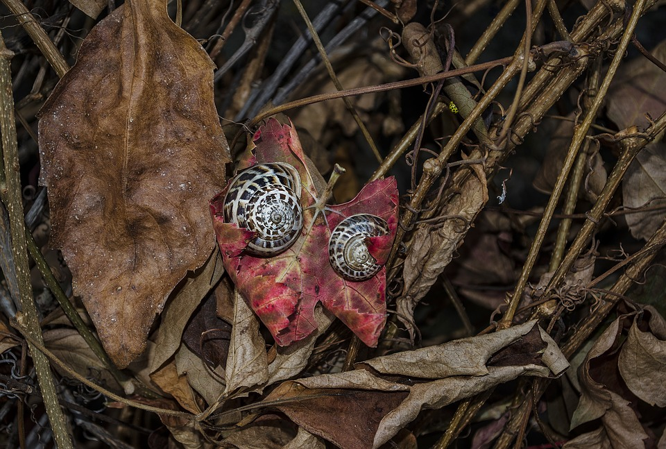 Snails, Leaves, Nature, Forest, Autumn, Shell