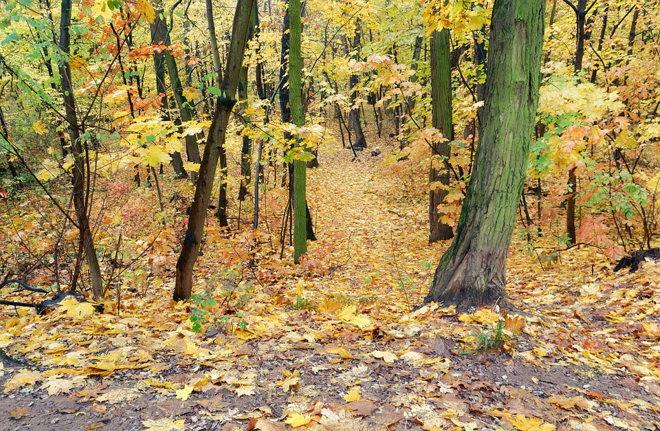 Landscape, Forest, Nature, Autumn, Trees, Leaves