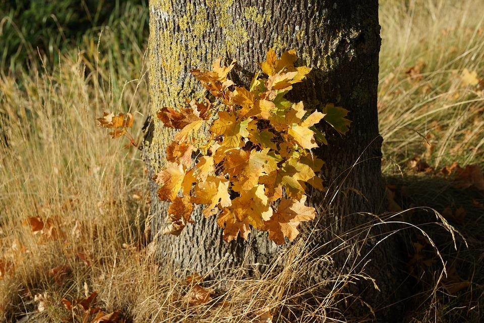 Autumn, Tree, Leaves, Discoloration, Colorful, Nature