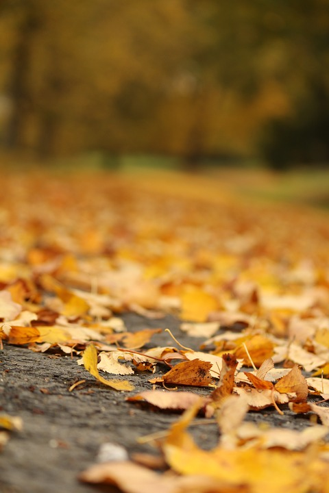 Autumn, Leaf, Nature, Ground, Outdoors, Fall Leaves