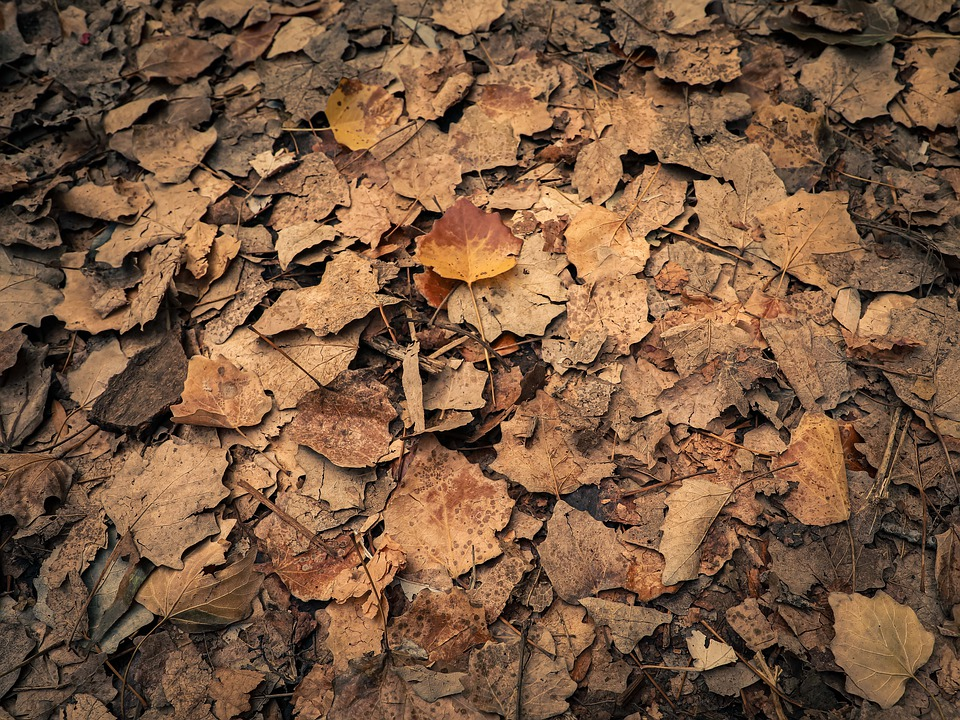 Fall, Leaves, Autumn, Forest, Nature, Texture, Pattern