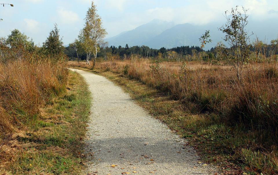 Heide, Autumn, Away, Promenade, Path, Nature, Trail