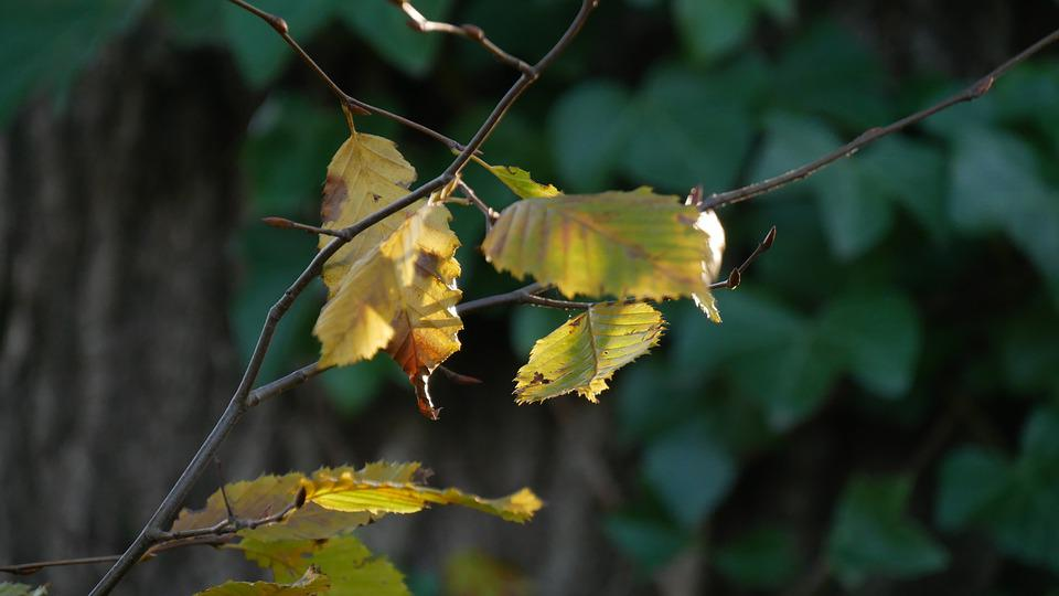 Sheet, Autumn, Green, Leaves, Nature, Fall, Season