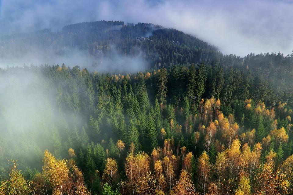 Autumn, Mountains, The Fog, Forest, Nature, Landscape