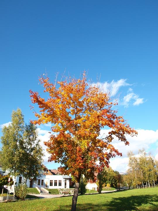 Tree, Autumn, Nature, Leaf
