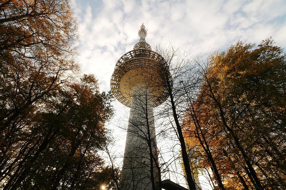 Tree, Sky, Park, Nature, Large, Landscape, Autumn