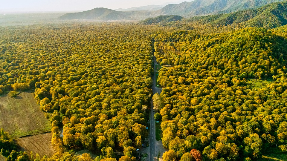 Aerial, Forest, Autumn, Landscape, Nature, Trees, Drone