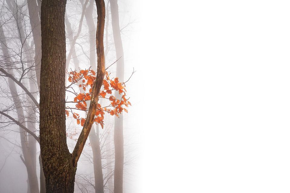 Autumn, Negative Space, Copy Space, Text Freedom