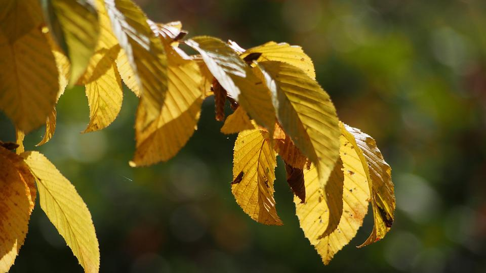Leaves, Autumn, Leaf, October, Deciduous Forest, Forest