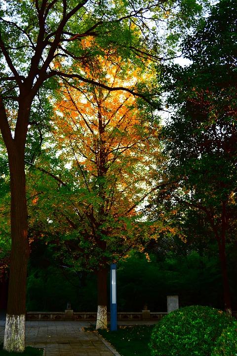 Autumn, Fire, Orange