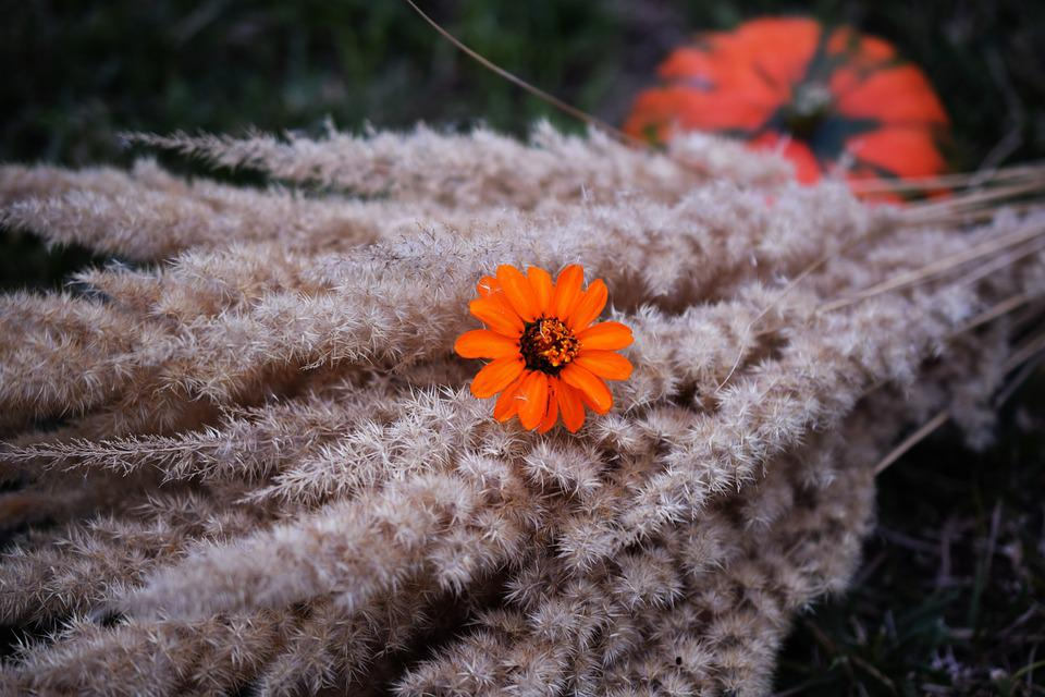 Autumn, Flower, Orange, Pumpkin