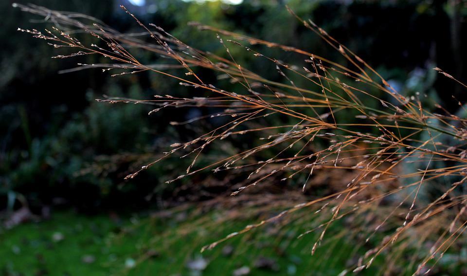 Ornamental Grass, Sun, Autumn