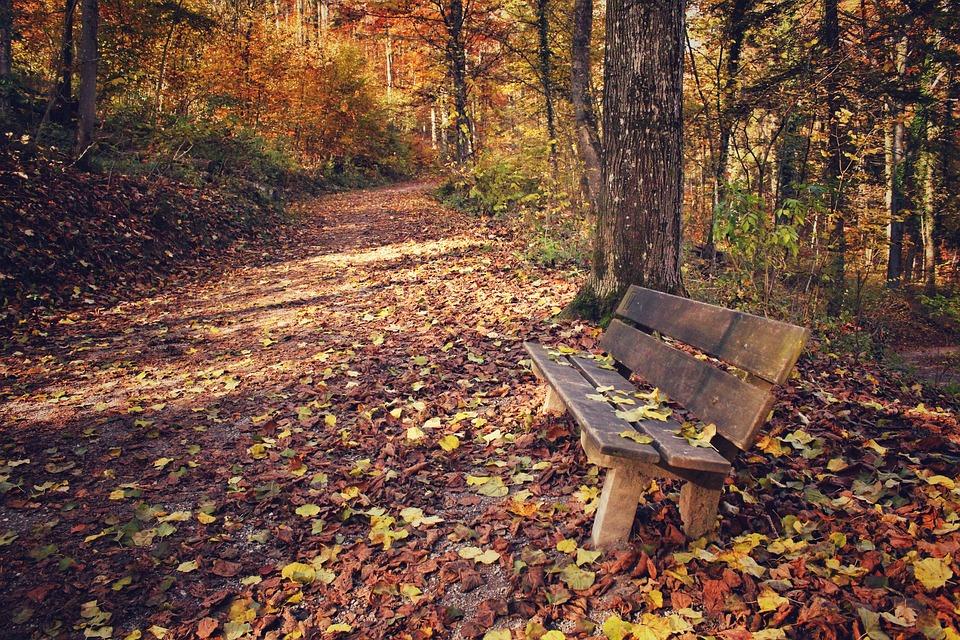Park, Park Bench, Leaves, Leaf, Autumn, Fall, Nature