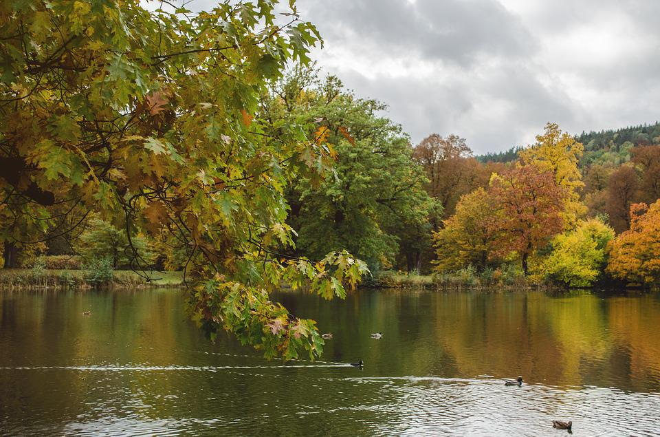 Lake, Autumn, Park, Nature