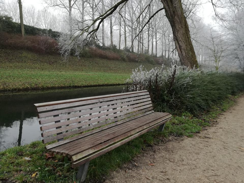 Bench, Tree, Park, Autumn