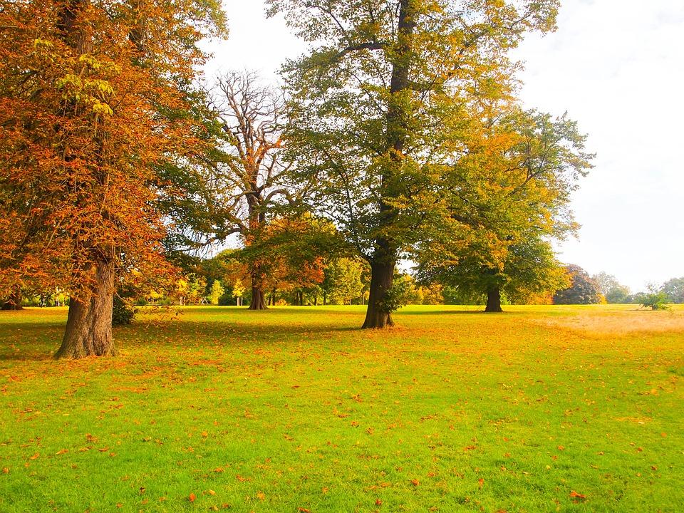 Park, Autumn, Ocher, Leaf, Yellow