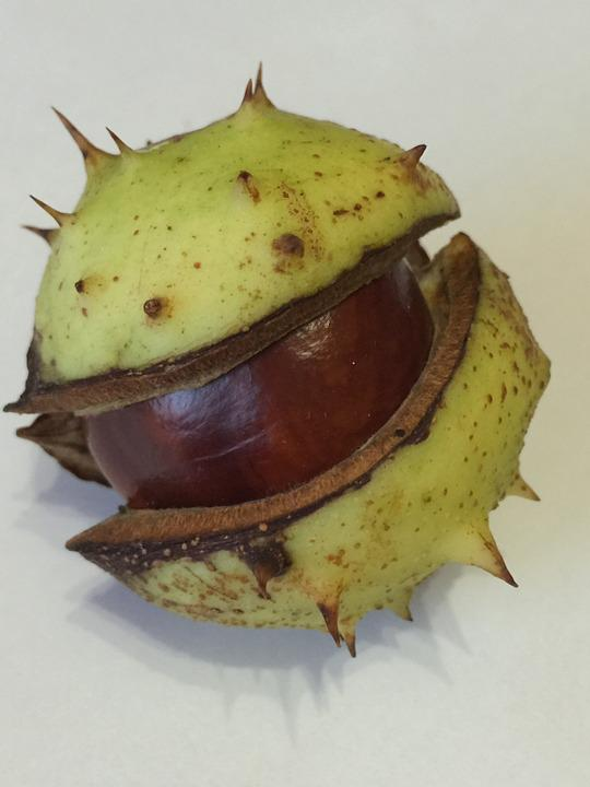 Chestnut, Autumn, Nature, Fruit, Pieksig
