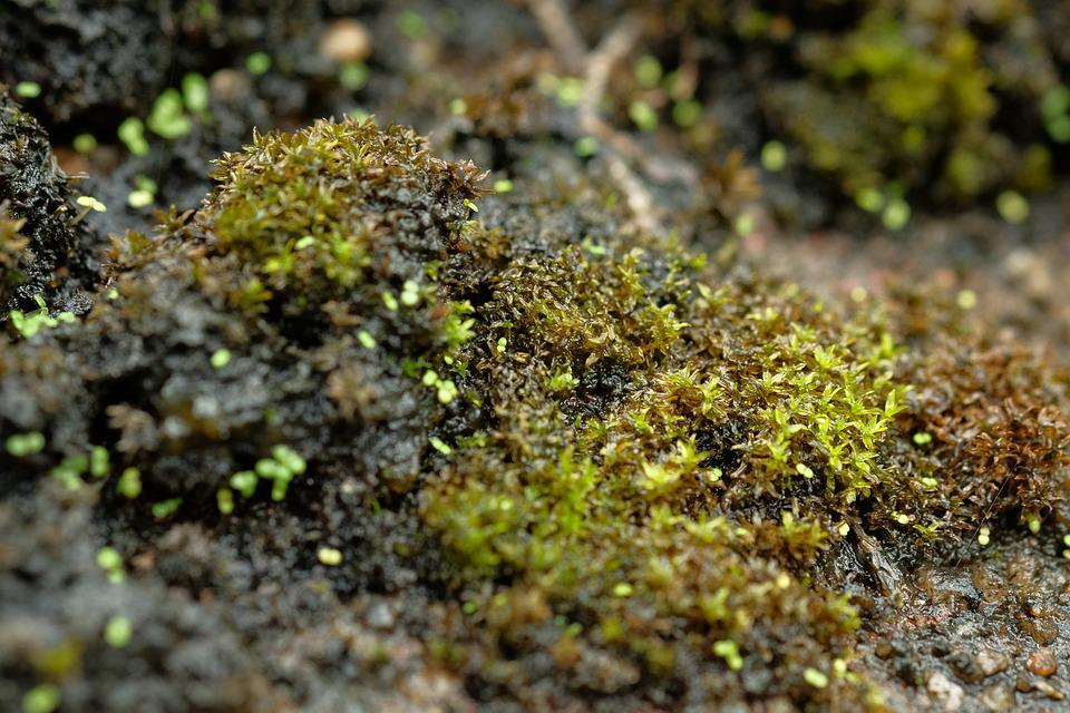 Moss, Plant, Green, Nature, Forest, Fall, White, Autumn