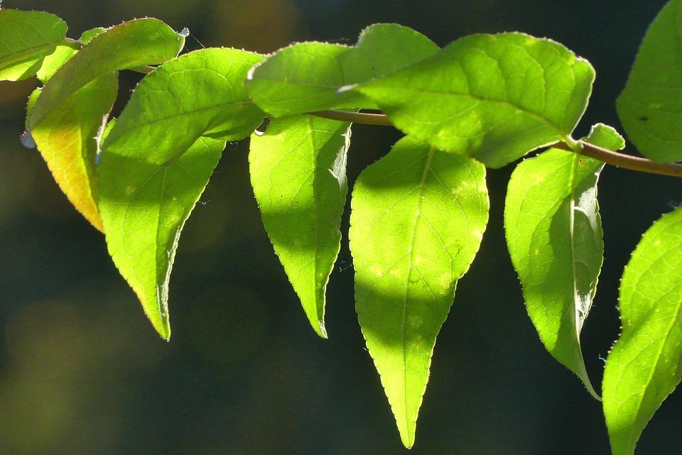 Foliage, Closeup, Tree, Autumn, Plant, Nature, Season