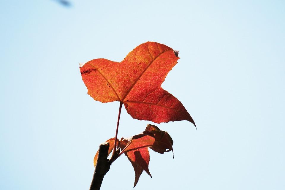 Nature, Leaf, Autumn, Plant, Outdoor, Light, Close-up